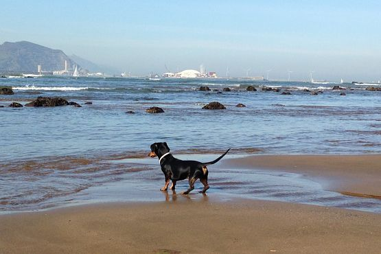 vacaciones con perro playa